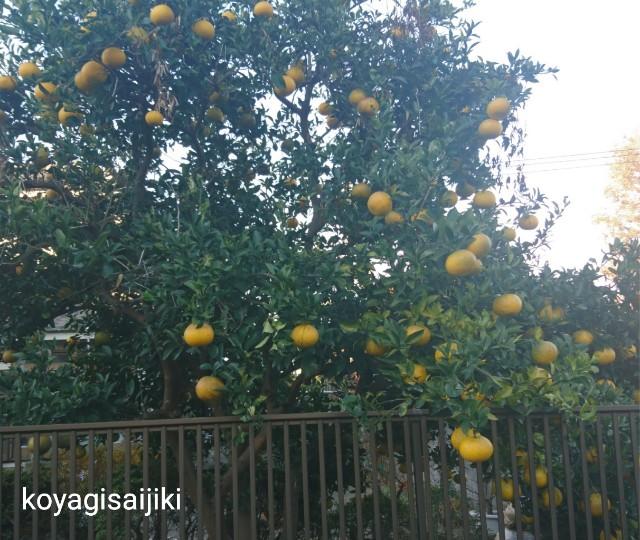 f:id:koyagi-saijiki:20181206233921j:image