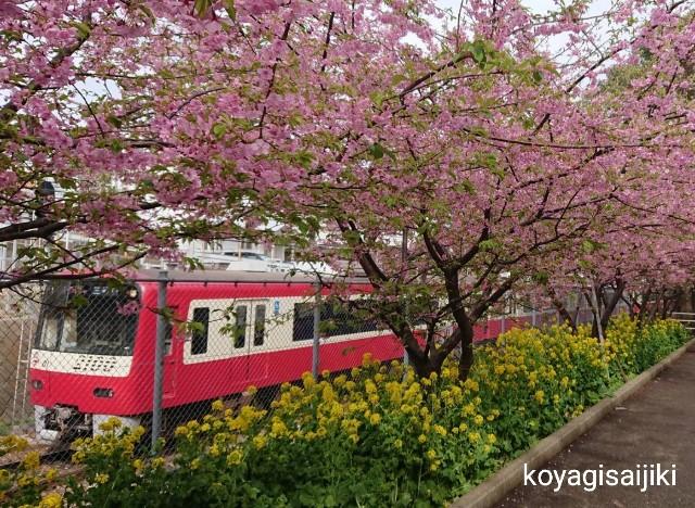 f:id:koyagi-saijiki:20190227181122j:image