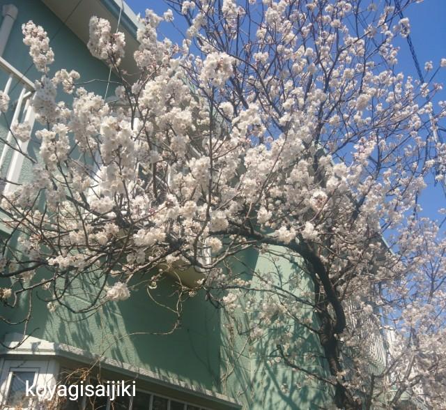 f:id:koyagi-saijiki:20190314144636j:image