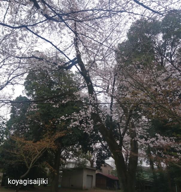 f:id:koyagi-saijiki:20190329175351j:image