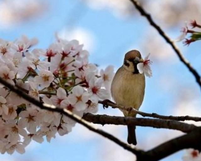 f:id:koyagi-saijiki:20190402134951j:image