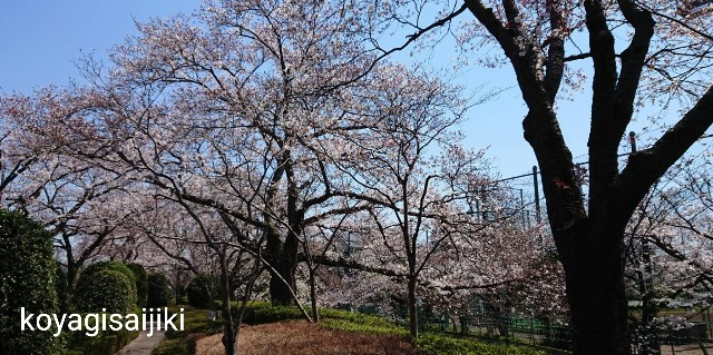 f:id:koyagi-saijiki:20190404174024j:image