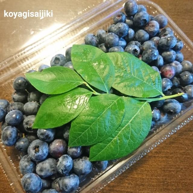 f:id:koyagi-saijiki:20190811132936j:image