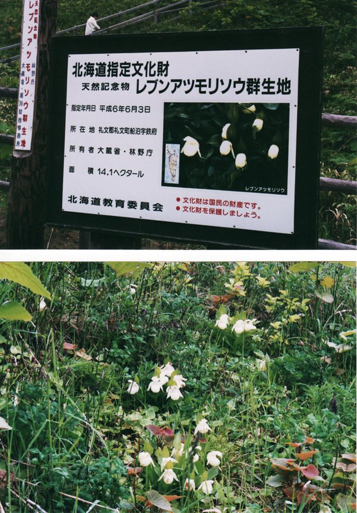 f:id:koyaken4852:20180120131839p:plain