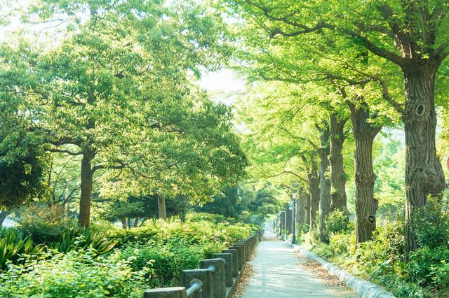 f:id:koyukiusagi:20190731161521j:plain
