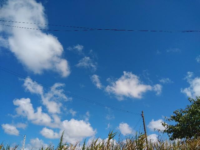 f:id:koyukiusagi:20210921132543j:image