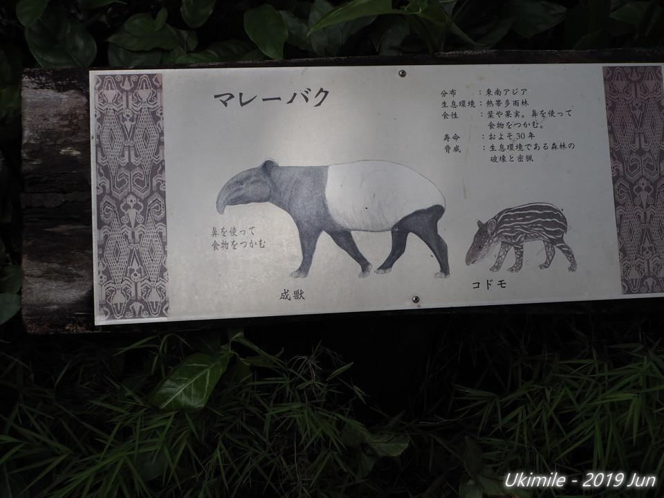 f:id:koyukizou:20190621121504j:plain