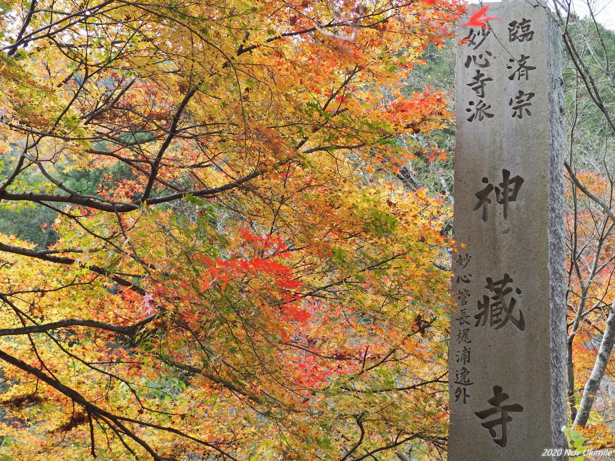 f:id:koyukizou:20201121120444j:plain