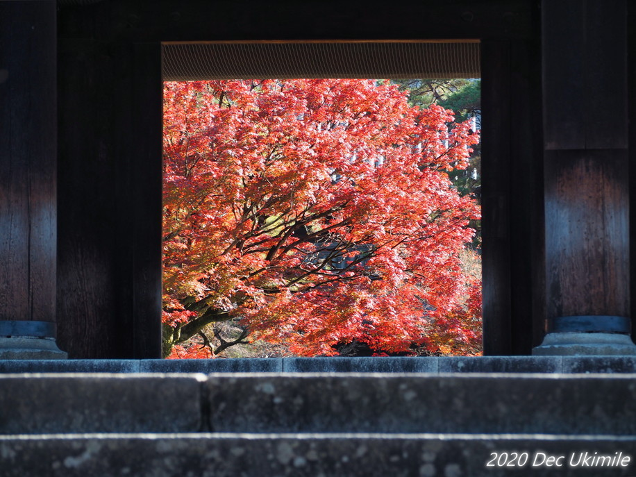 f:id:koyukizou:20201204094907j:plain