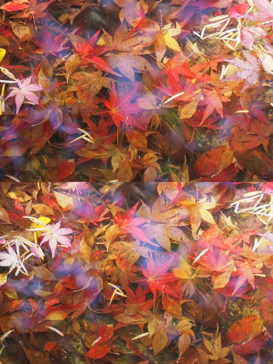 f:id:koyukizou:20201213230929j:plain
