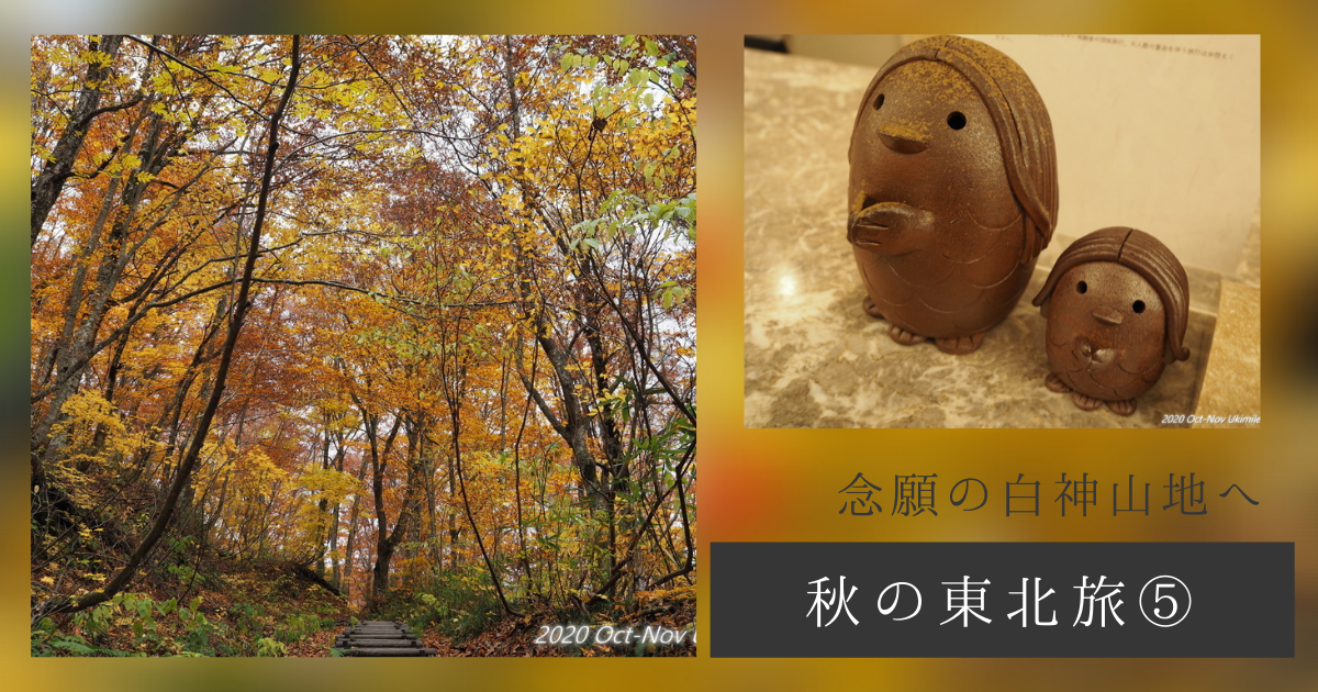 f:id:koyukizou:20210224084053p:plain