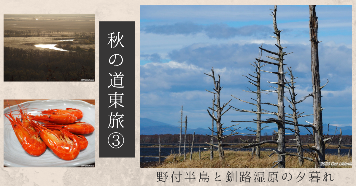 f:id:koyukizou:20210224202741p:plain