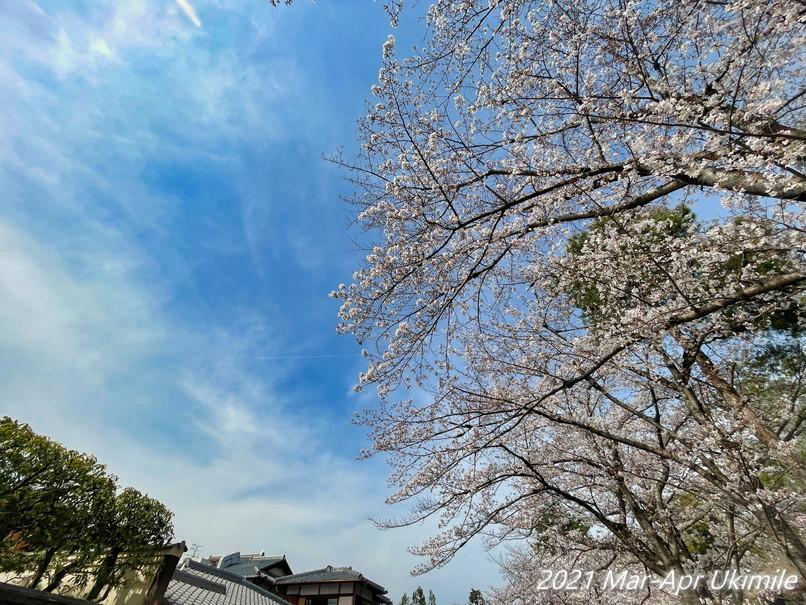 f:id:koyukizou:20210327135607j:plain
