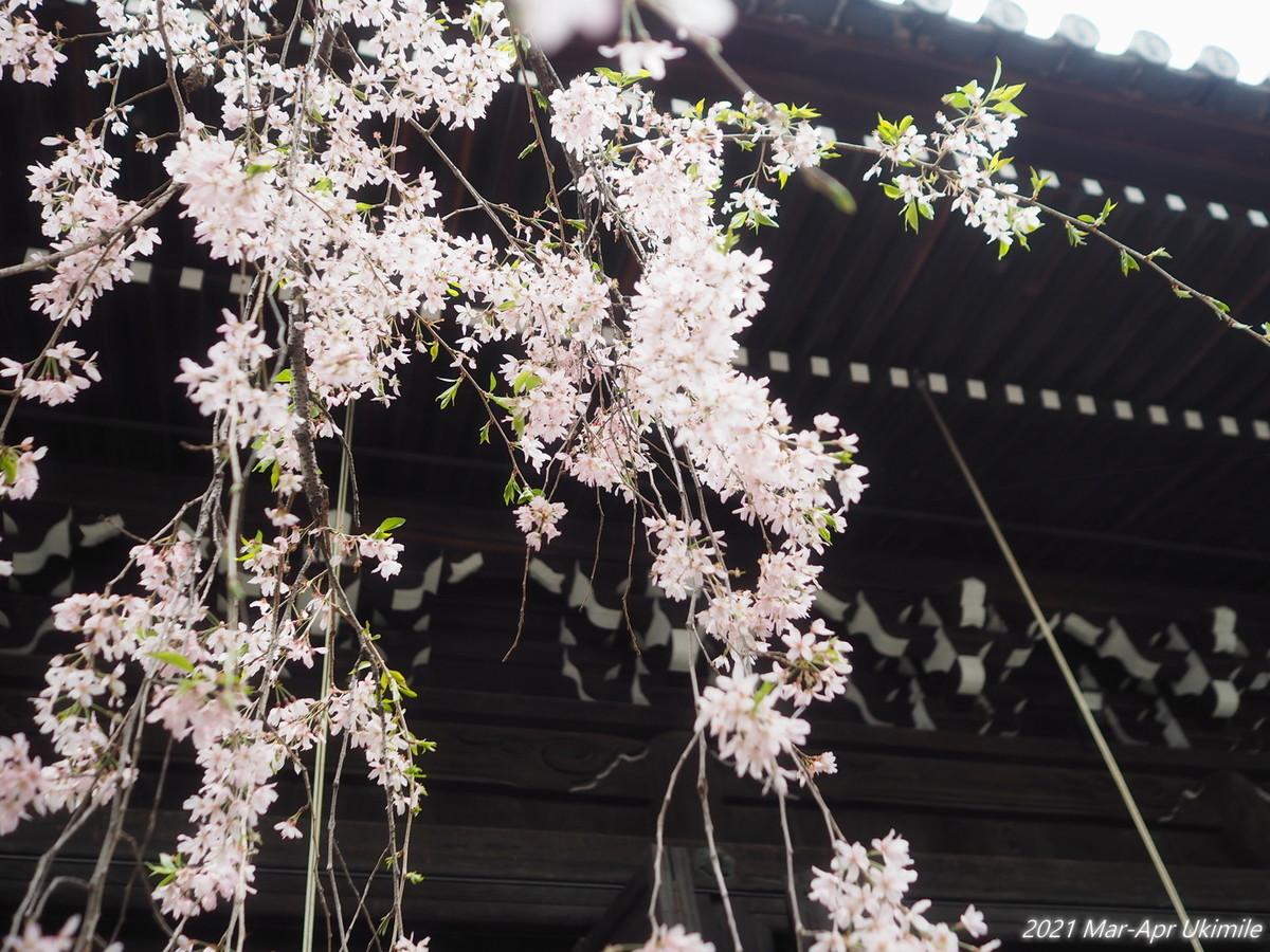 f:id:koyukizou:20210328103810j:plain