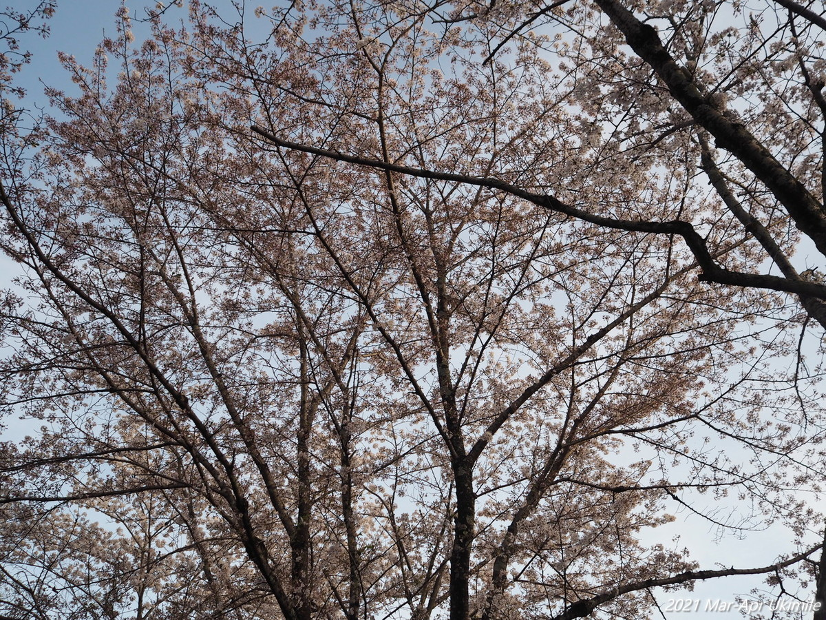 f:id:koyukizou:20210331174121j:plain