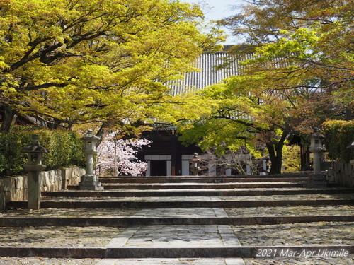 f:id:koyukizou:20210401125456j:plain