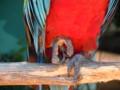 [白浜][鳥]