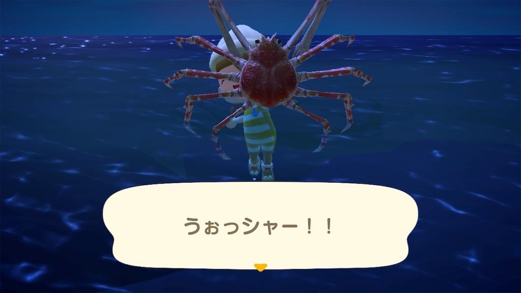 f:id:kozika-san:20210304180551j:image