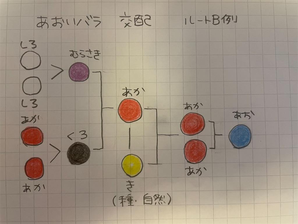 f:id:kozika-san:20210614192614j:plain