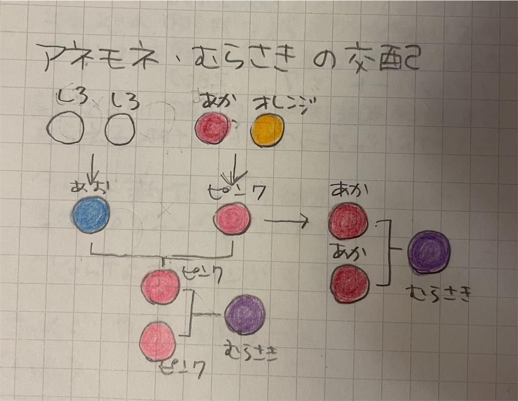 f:id:kozika-san:20210815192621j:image