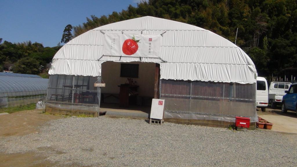 磯本農園(福岡・糸島)あまおうだけを栽培しています。