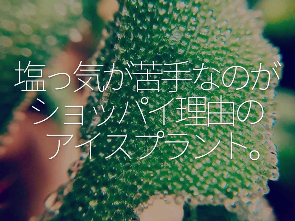 f:id:kozonoayumi2018:20180326152927j:plain