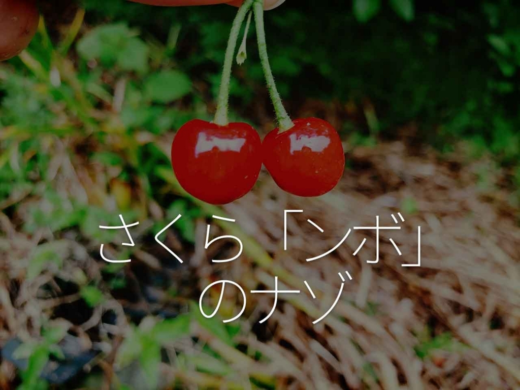 さくら「ンボ」のナゾ【適材適食】小園亜由美(管理栄養士・野菜ソムリエ上級プロ)