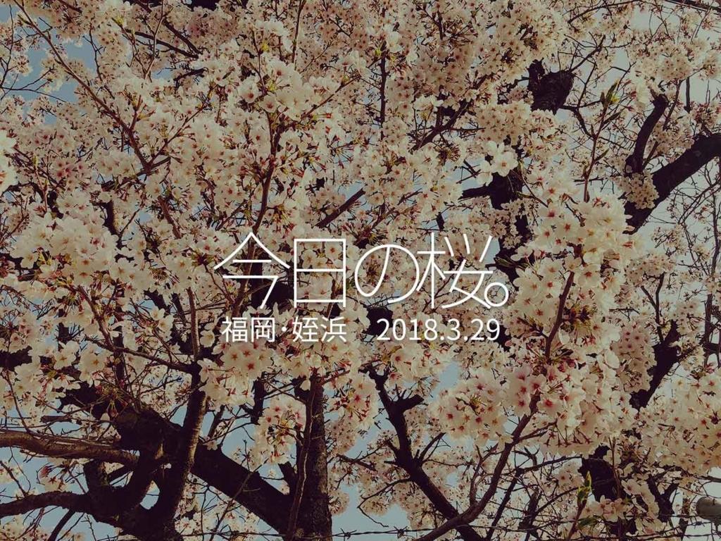 桜の観察【適材適食】小園亜由美(管理栄養士・野菜ソムリエ上級プロ)