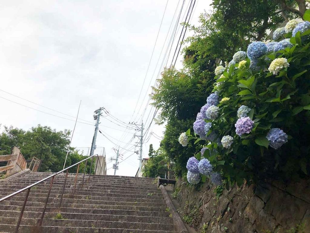 愛宕神社に向かう階段の途中でアジサイが応援してくれました。【適材適食】小園亜由美(管理栄養士・野菜ソムリエ上級プロ)