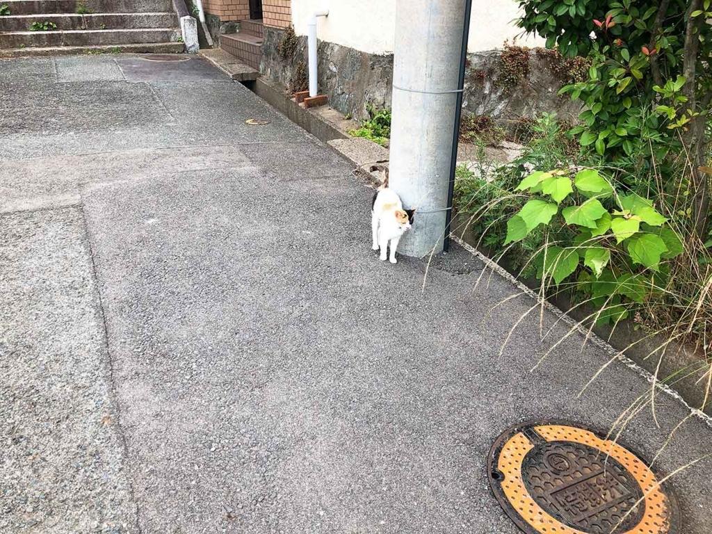 愛宕神社に向かう階段の途中で出会った三毛猫。【適材適食】小園亜由美(管理栄養士・野菜ソムリエ上級プロ)