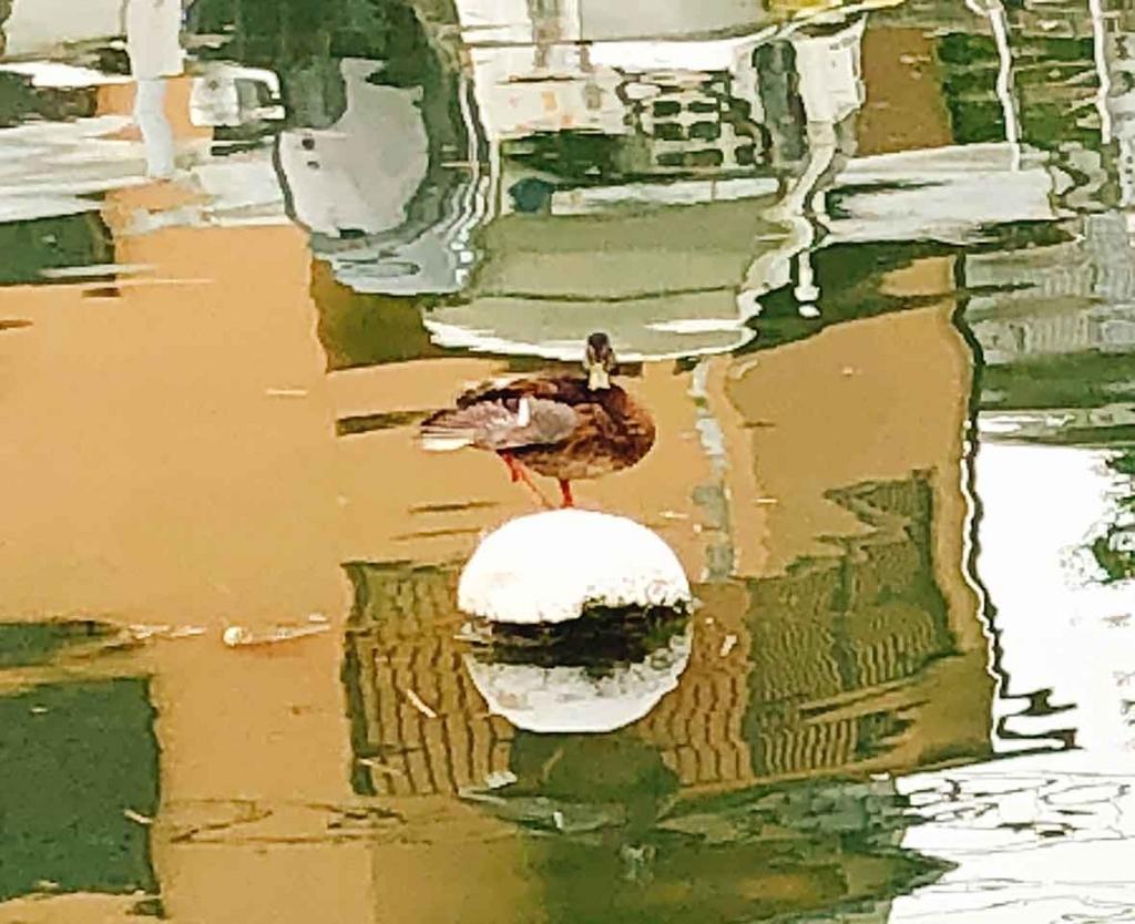 「西日本豪雨」近くの川(福岡・姪浜 名柄川)の河口付近の様子【適材適食】小園亜由美(管理栄養士・野菜ソムリエ上級プロ)