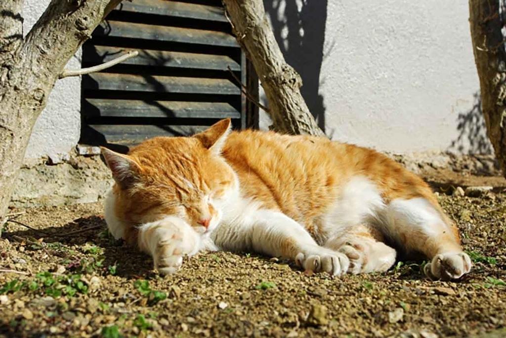 「酷暑のためこどもたちのビタミンDが足りない!?」日光に当たることで体内にビタミンDは作られるのです【適材適食】小園亜由美(管理栄養士・野菜ソムリエ上級プロ)