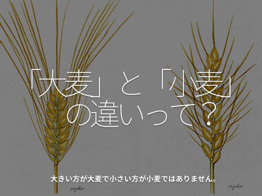 「『大麦』と『小麦』の違いって?」大きい方が大麦で小さい方が小麦ではありません。【適材適食】小園亜由美(管理栄養士・野菜ソムリエ上級プロ)