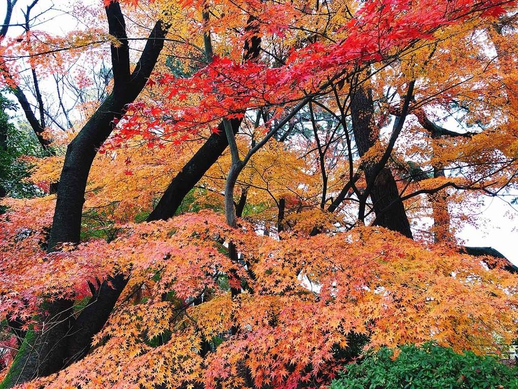 紅葉@名古屋城【適材適食】小園亜由美(管理栄養士・野菜ソムリエ上級プロ)