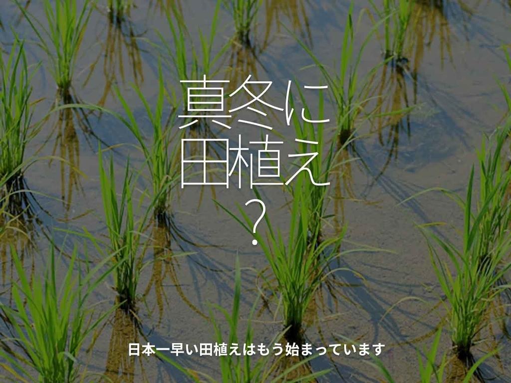 「真冬なのに田植え?」日本一早い田植えはもう始まっています【適材適食】小園亜由美(管理栄養士・野菜ソムリエ上級プロ)