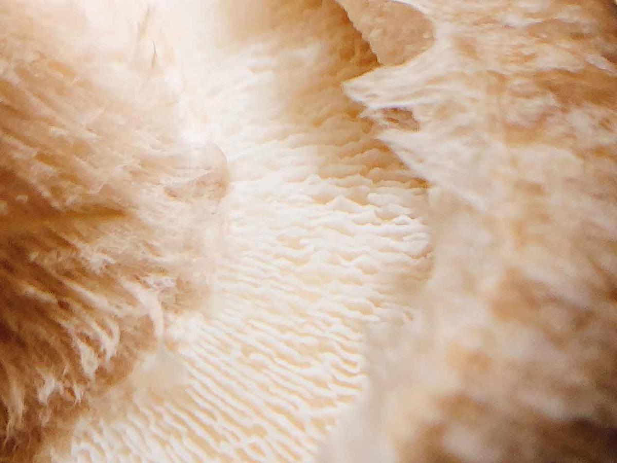「キノコの山は食べ盛り♪」自宅で育てたシイタケを収穫&実食@『しいたけ農園』しいたけ栽培キット【適材適食】小園亜由美(管理栄養士・野菜ソムリエ上級プロ)