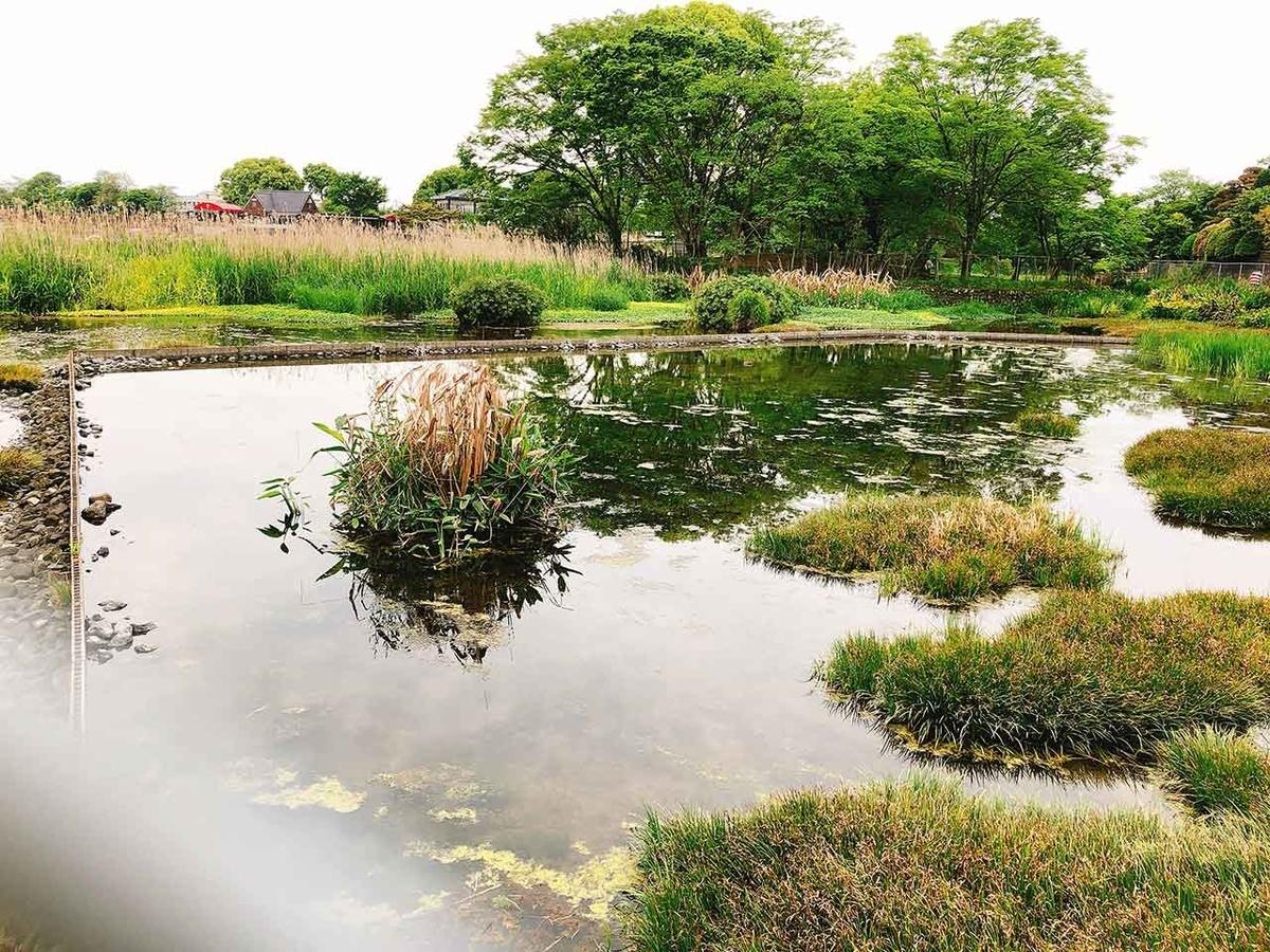 国指定天然記念物「スイゼンジノリ発生地」保護区@熊本県熊本市