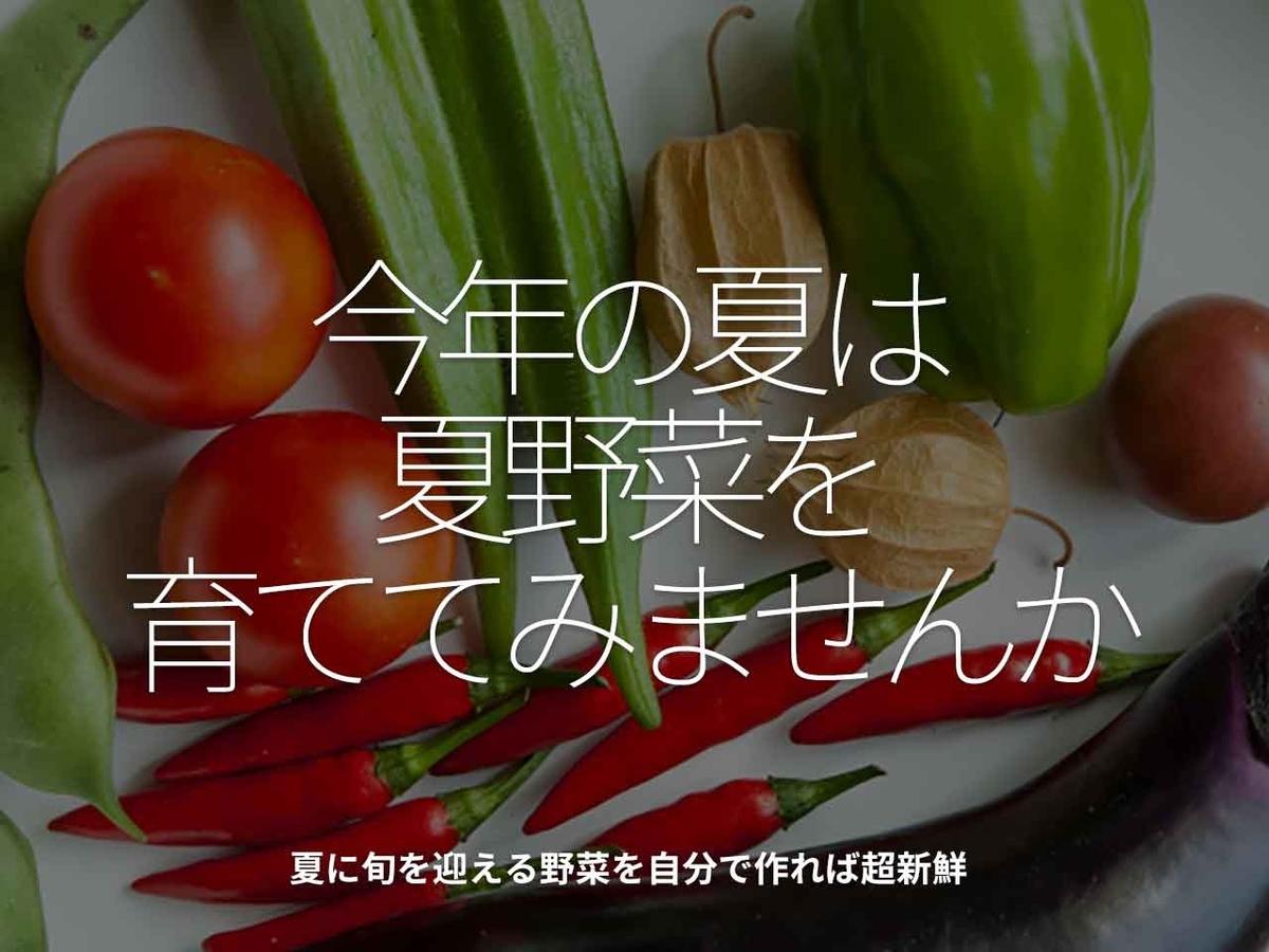 「今年の夏は夏野菜を育ててみませんか」夏に旬を迎える野菜を自分で作れば超新鮮【適材適食】小園亜由美(管理栄養士・野菜ソムリエ上級プロ)