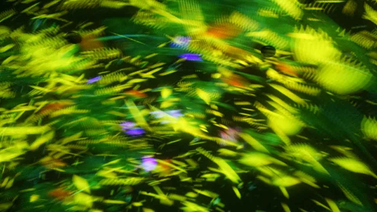 「team Lab★Planets は色と形と音と触感で私を刺激する空間」新豊洲にあるチームラボ・プラネッツに行ってみた@東京その⑥【適材適食】小園亜由美(管理栄養士・野菜ソムリエ上級プロ)