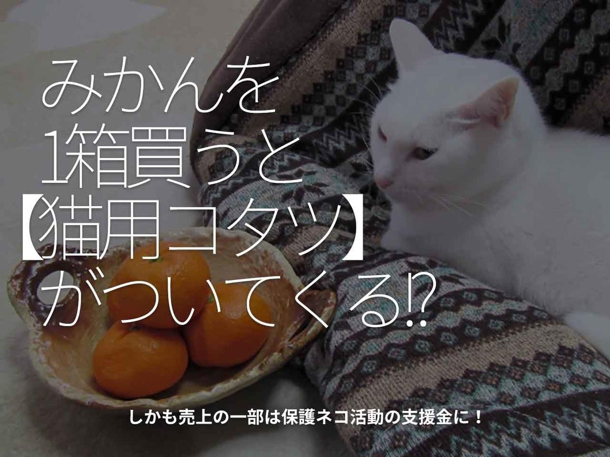 「みかんを1箱買うと【猫用コタツ】がついてくる!?」しかも売上の一部は保護ネコ活動の支援金に!【適材適食】小園亜由美(管理栄養士・野菜ソムリエ上級プロ)