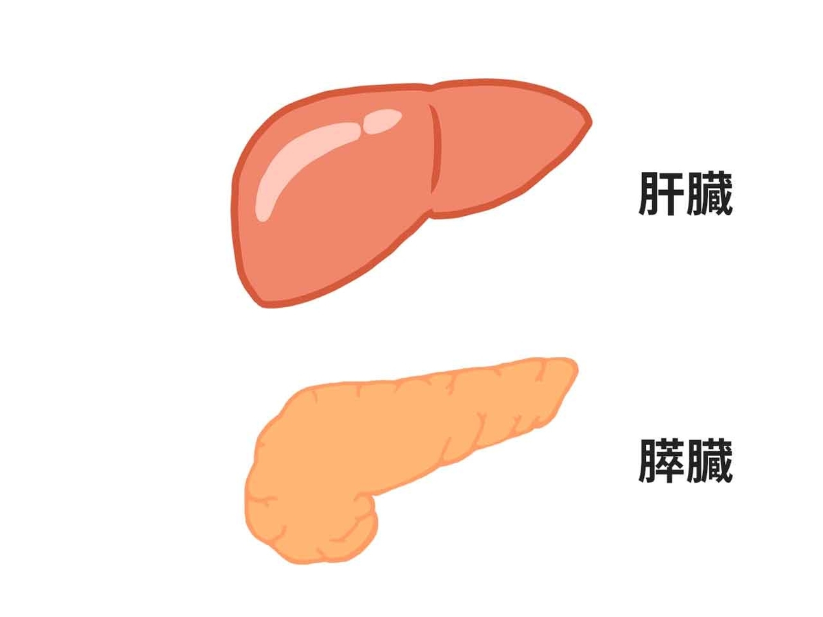 「糖尿病は肝臓から膵臓に脂が溢れ出て引き起こされる!?」英・ニューカッスル大学が研究発表@Gigazineより【適材適食】小園亜由美(管理栄養士・野菜ソムリエ上級プロ)