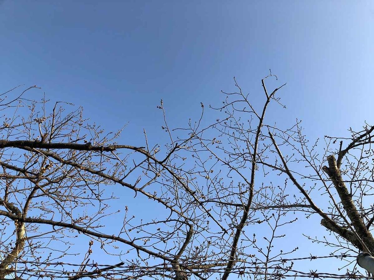「椿と桜と蒲公英 -冬から春へ-」2020年3月21日@福岡・舞鶴公園【適材適食】小園亜由美(管理栄養士・野菜ソムリエ上級プロ)
