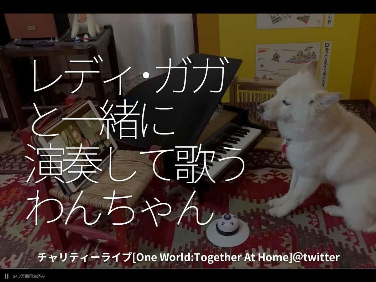 「レディー・ガガと一緒に演奏して歌うわんちゃん」チャリティーライブ[ One World:Together At Home ] @ twitter【適材適食】小園亜由美(管理栄養士・野菜ソムリエ上級プロ)