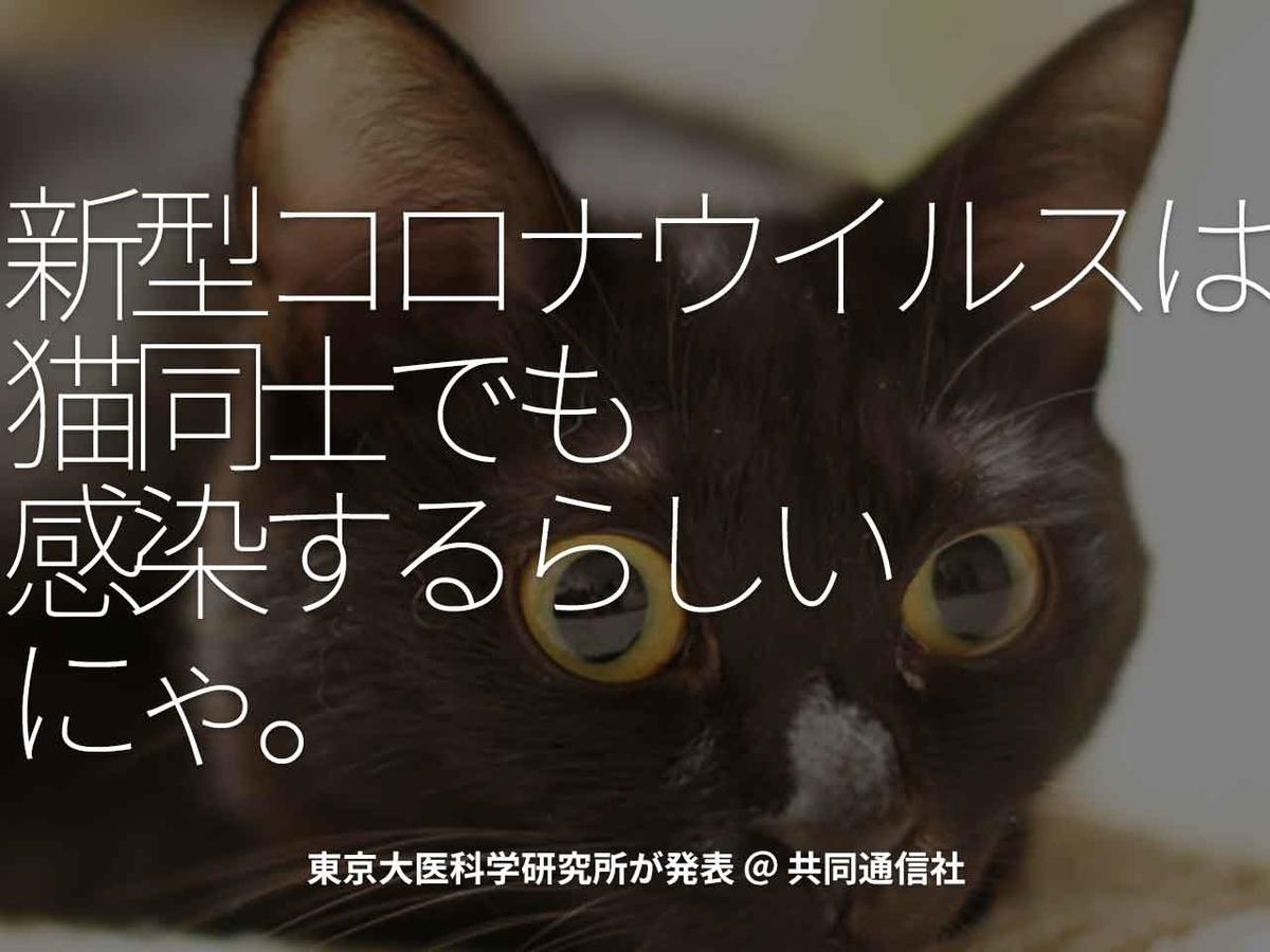 「新型コロナウイルスは、猫同士でも感染するらしい、にゃ。」東京大医科学研究所が発表 @ 共同通信社【適材適食】小園亜由美(管理栄養士・野菜ソムリエ上級プロ)