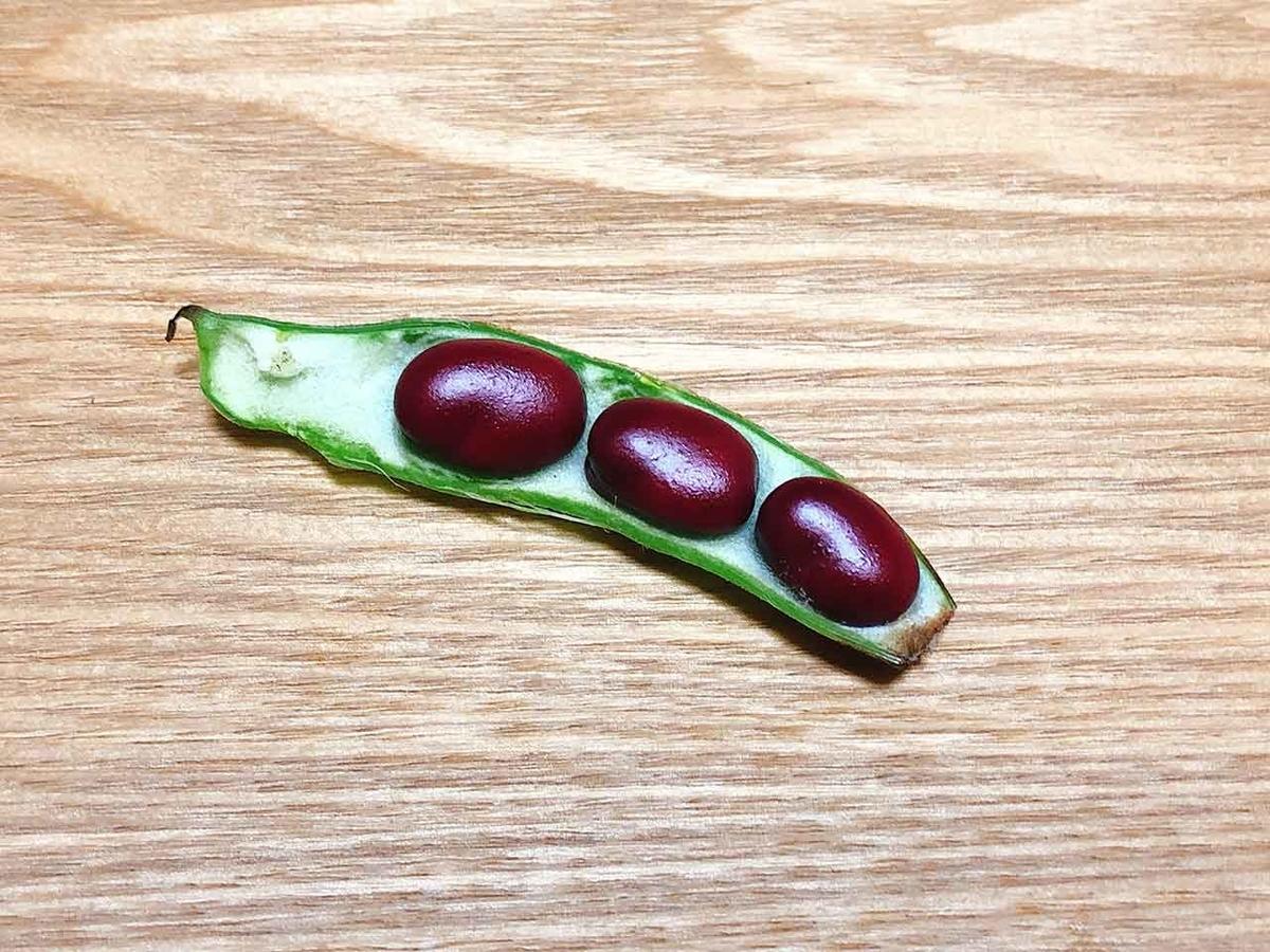 「ソラマメだってたまには赤くなる」あまり見かけない『赤ソラマメ』を見つけた【適材適食】小園亜由美(管理栄養士・野菜ソムリエ上級プロ)