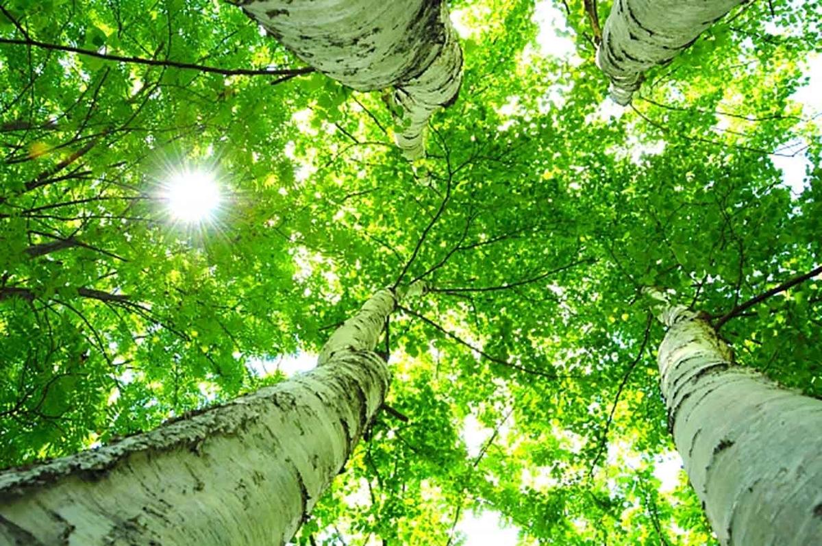「なんで葉っぱは緑色なんだと思う?」葉っぱがミドリ色の理由について調べてみた★次へ続く日記第5話★【適材適食】小園亜由美(管理栄養士・野菜ソムリエ上級プロ)