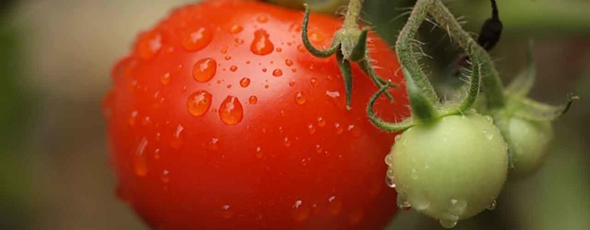 「8.31 野菜の日」今食べないとモッタイナイ!夏に旬を迎える野菜たち【適材適食】小園亜由美(管理栄養士・野菜ソムリエ上級プロ)