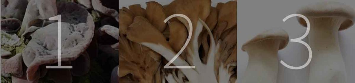 「旬の役菜 9月【キノコ】」今が旬★ 美味しくて+栄養価が高くて+安くて=元気にしてくれる季節の野菜を紹介【適材適食】小園亜由美(管理栄養士・野菜ソムリエ上級プロ)