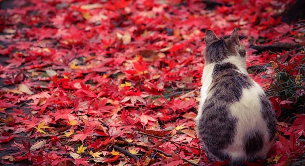 「なんで葉っぱの色が変わって紅葉するの?」赤色や黄色は栄養素の色です。【適材適食】小園亜由美(管理栄養士・野菜ソムリエ上級プロ)