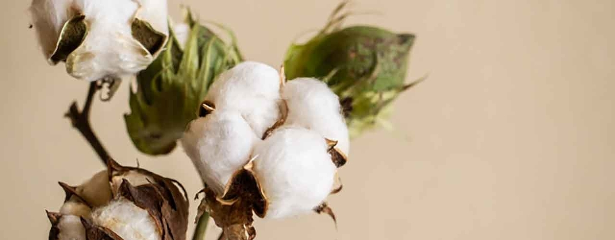 「Cotton or Silk (木綿か絹か)」とうふの話?【適材適食】小園亜由美(管理栄養士・野菜ソムリエ上級プロ)糖尿病専門・甲状腺専門クリニック勤務@福岡姪浜・福岡天神